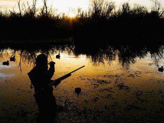 Полювання на качок з опудалами