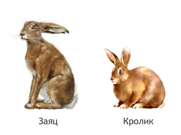 Полювання на зайця - як читати сліди косого і інші секрети від досвідченого зайчатніка