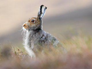 Полювання на зайця восени