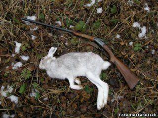 Полювання на зайця по чернотропу