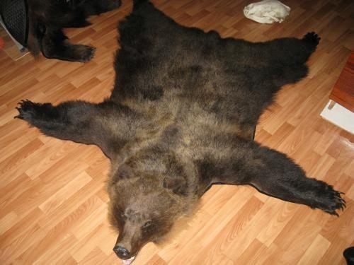 Шкура ведмедя