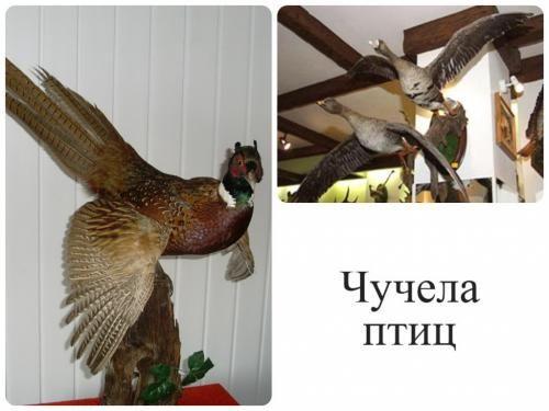 Опудала фазана і гусей