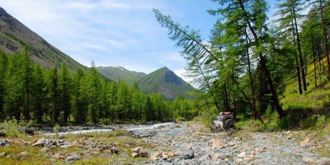 Мисливські тури на алтай - організація, проведення, трофеї, види полювання, ціни