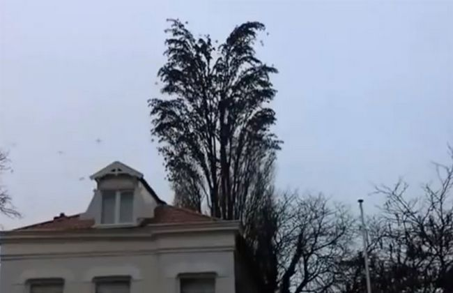 Він просто знімав на відео це дерево як раптово зграя птахів почала робити ось це!