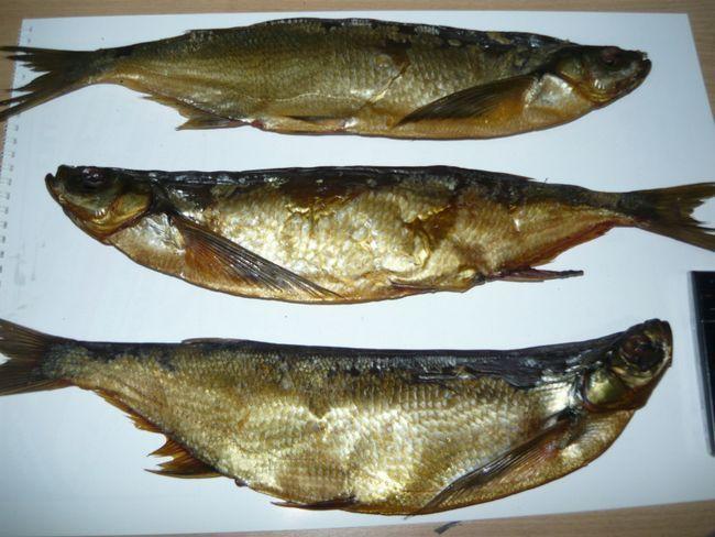 Властивості риби чехонь
