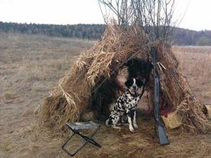 мисливський пес біля куреня в очікуванні полювання