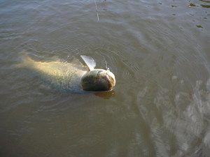 Спінінга сезонна рибалка