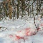 По кров`яному сліду