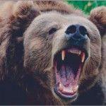 небезпечний ведмідь