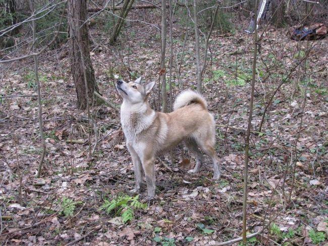 Злазь лисиця - я тебе наздогнав!