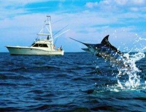 Підліток побив рекорд з ловлі меч-риби фото 3