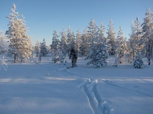 Корисні поради, що робити, якщо ви заблукали на полюванні і як вижити в зимовому лісі