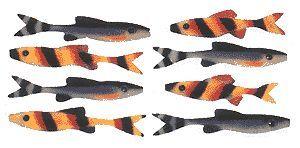 Поролонова рибка в бойовому розфарбуванні.