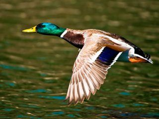 Правила збереження пернатої дичини після полювання і приготування птиці на природі