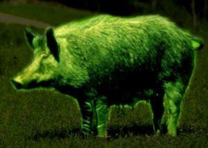 Прилад нічного бачення для полювання