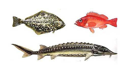 Приготування смаженої, запеченої, відвареної риби