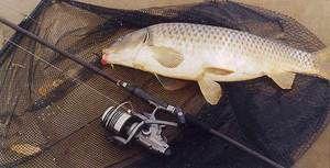Риболовля влітку: як правильно ловити сазана