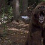 Зустріч з ведмедем