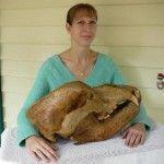 Череп печерного ведмедя, знайденого в Аргентині