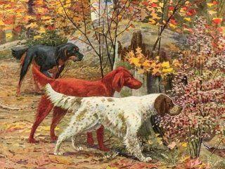 Сетери - універсальні мисливські собаки з джентельменськім благородством