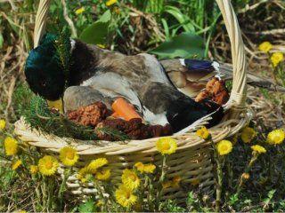 Щи багаті з м`ясом весняного селезня