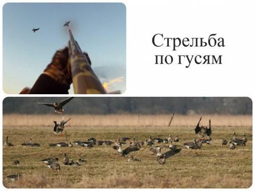Стрілянина по гусям