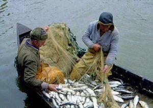 У волгоградських браконьєрів вилучили 600 кілограмів улову