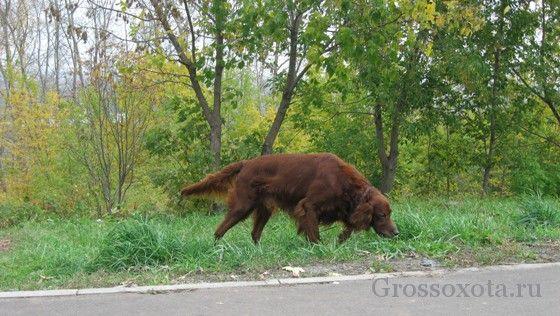 Догляд за мисливським собакою