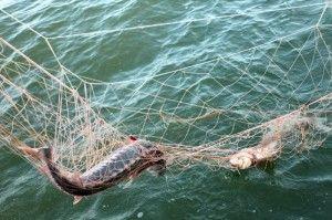 У ярославської області були затримані 9 браконьєрів