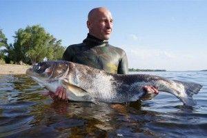 У селищі криниця пройшов чемпіонат з підводного полювання