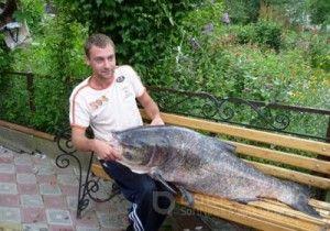 У тернополі спійманий товстолобик вагою 37 кілограм