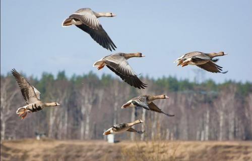 Весняний мисливський сезон 2015 на старті - правила полювання, терміни і на кого можна полювати