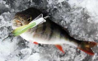 Зимова ловля окуня на балансир