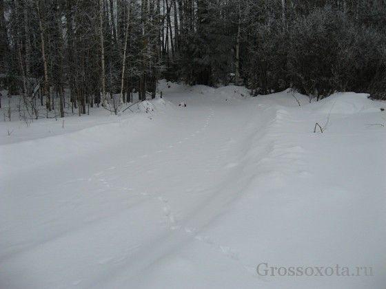 Зимова полювання на лисиць